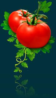 img_tomato_thumb.png