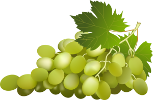 green-grapes-clipart.png