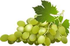 green-grapes-clipart_thumb.png