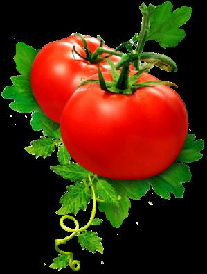 img_tomato.png